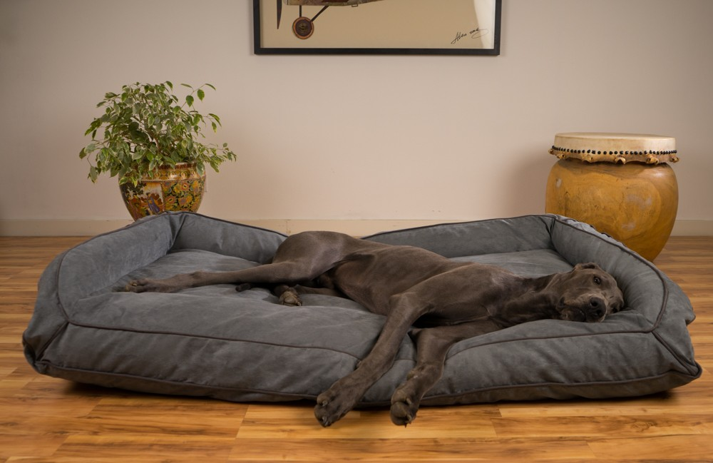 Image of: Great Dane Dog Beds Image