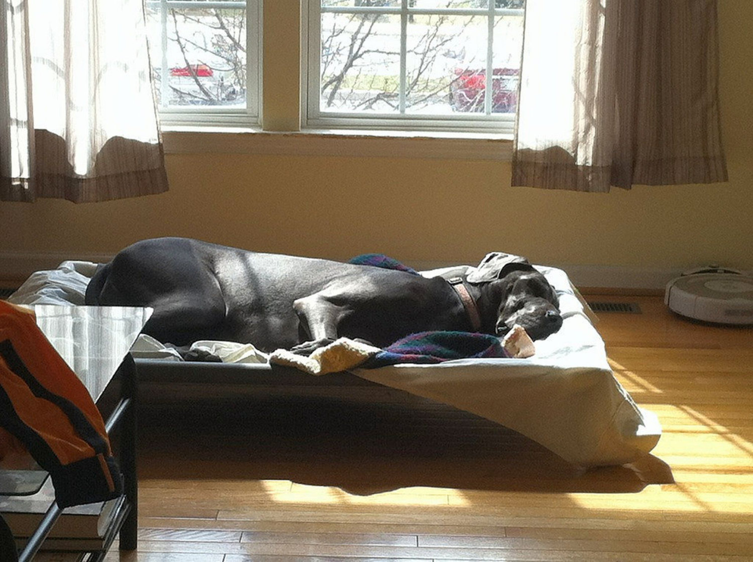 Great Dane Dog Beds Photos