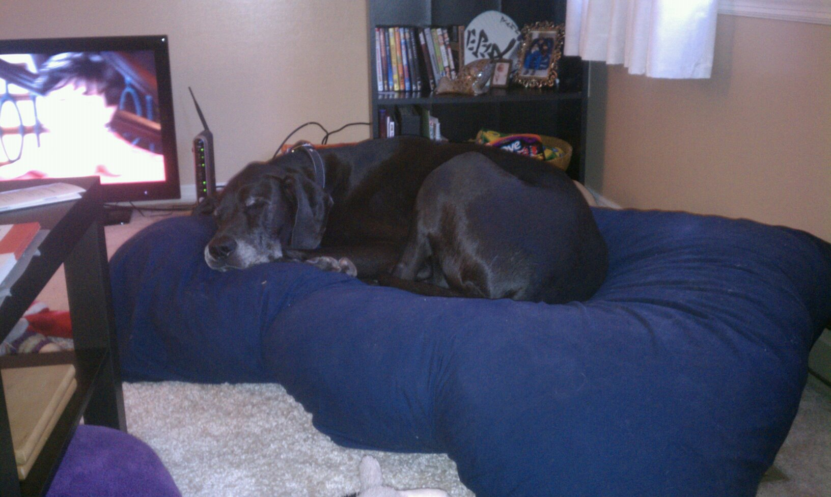 Photos Of Great Dane Dog Beds