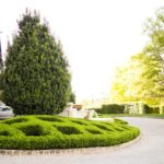 Boxwood Hedge Around Tree