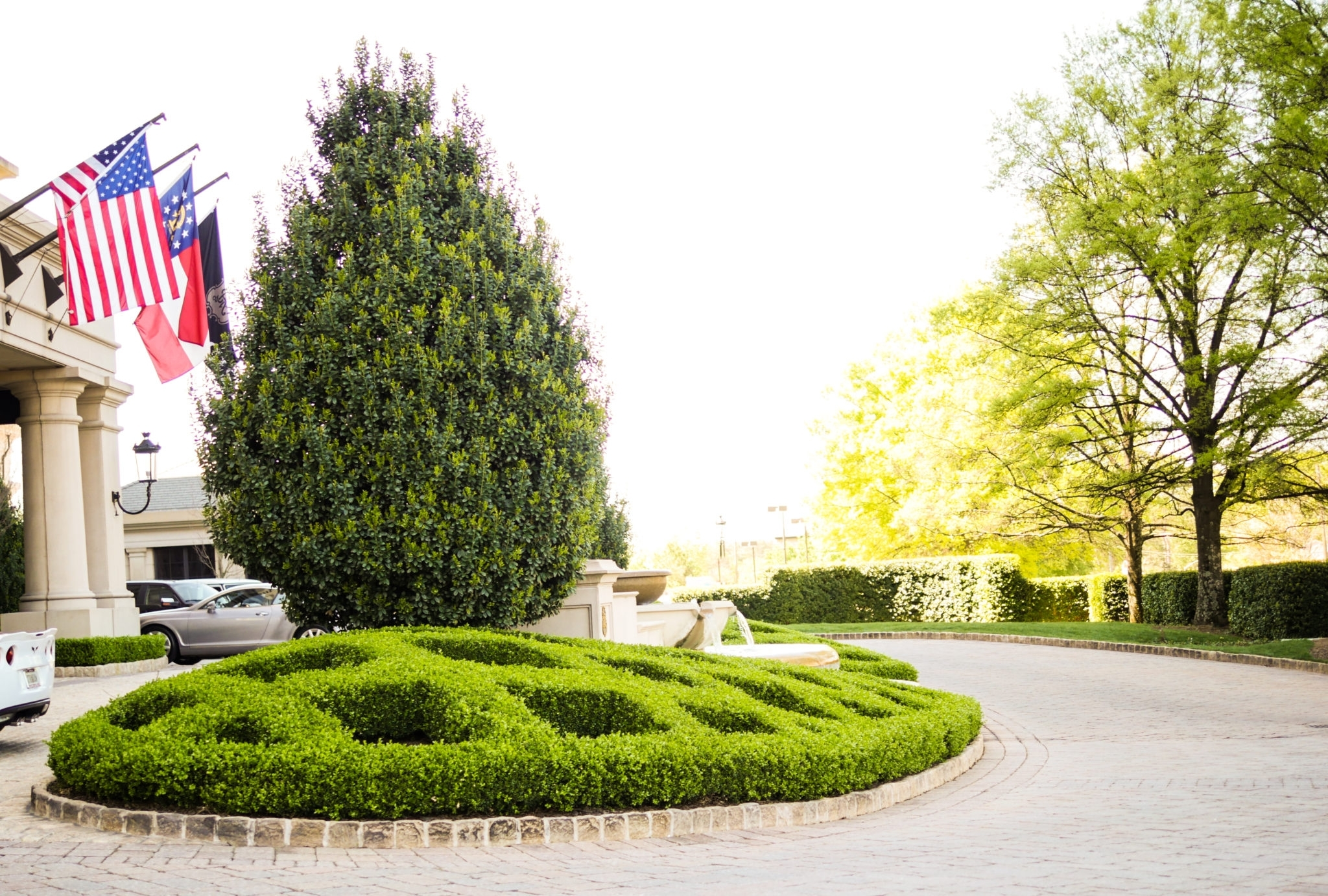 Image of: Boxwood Hedge Around Tree