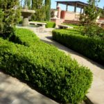Boxwood Hedge Design