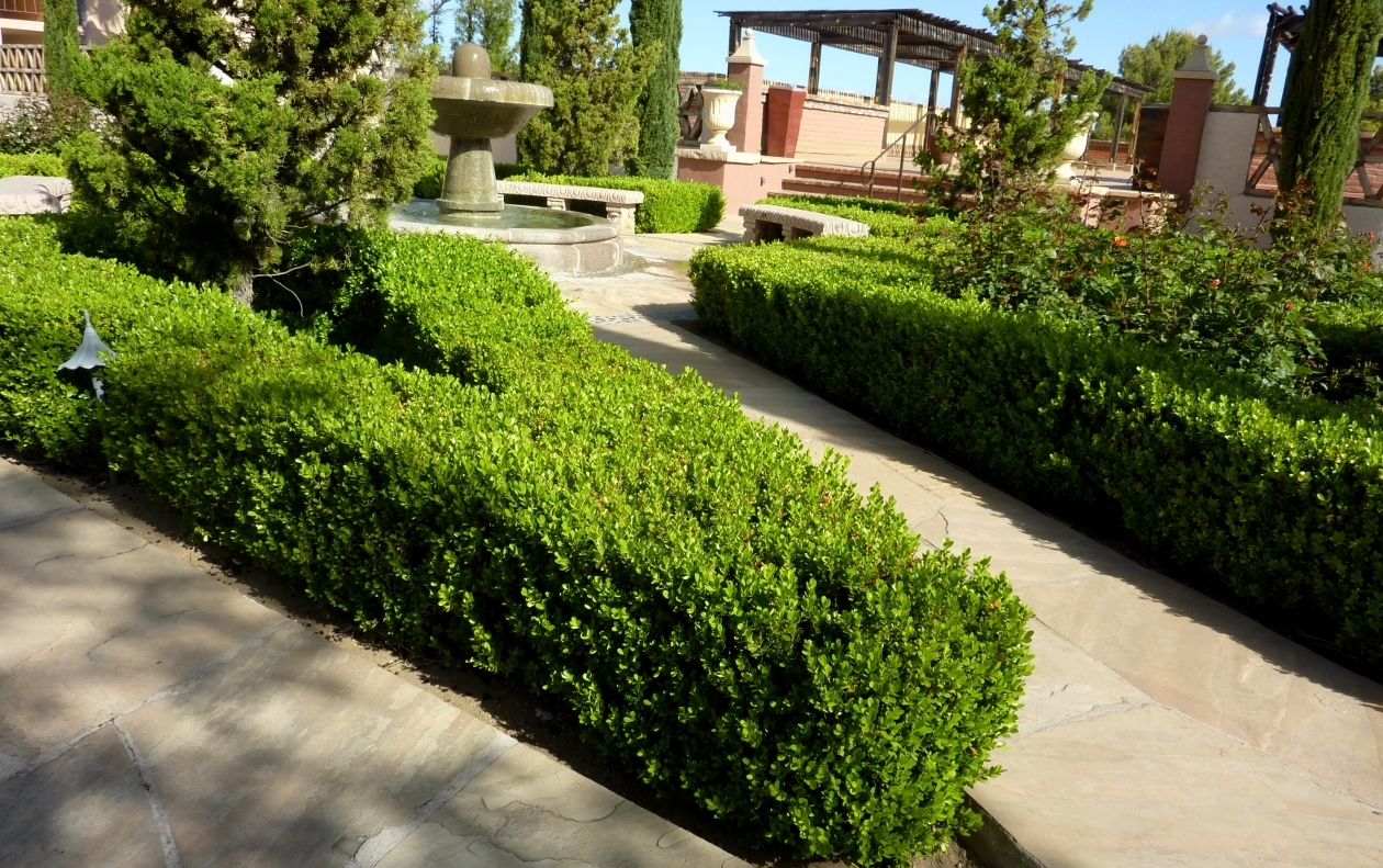 Image of: Boxwood Hedge Design