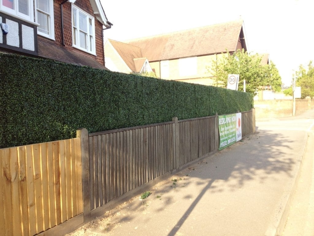 Image of: Boxwood Hedge Fence