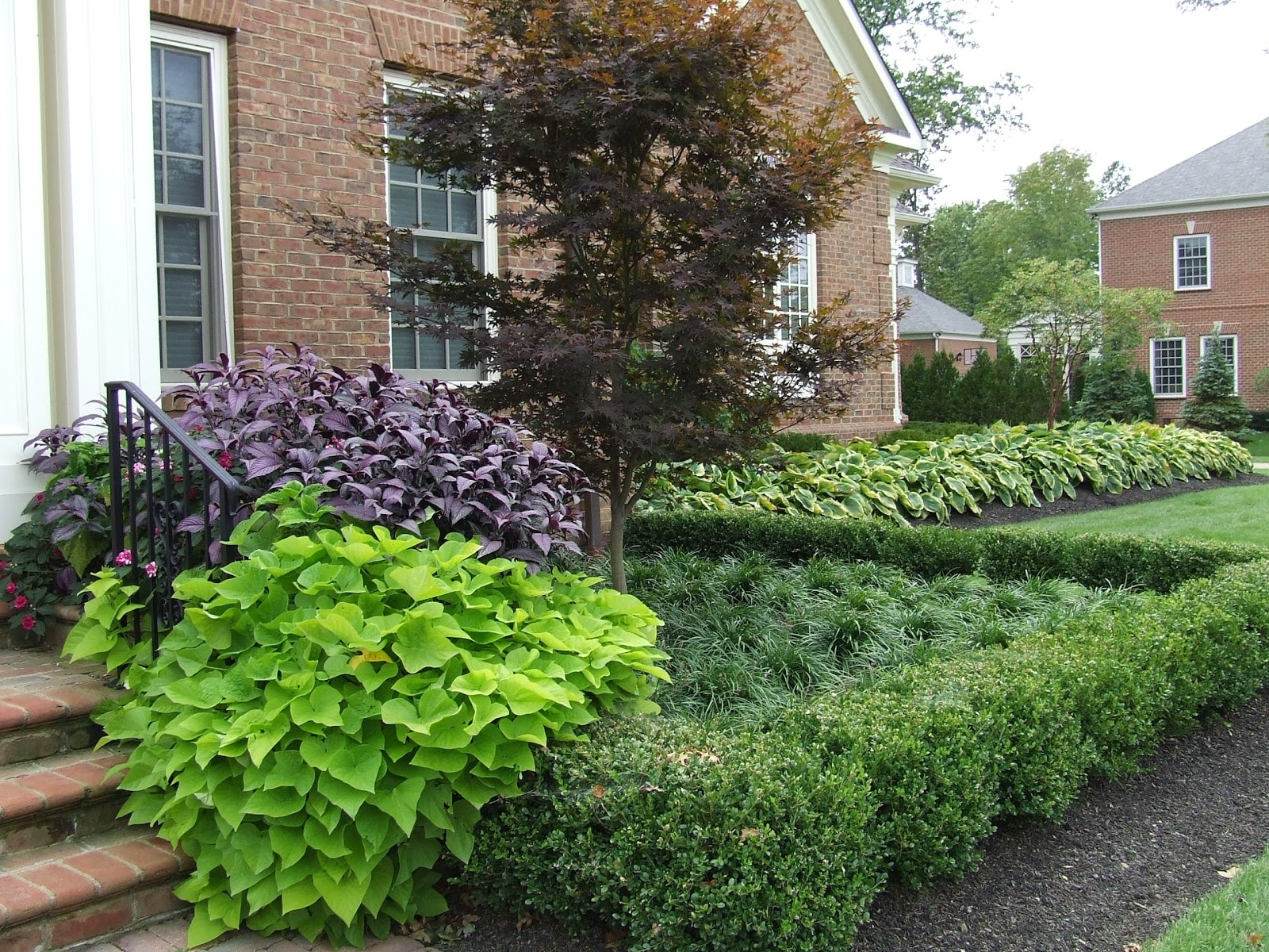 Image of: Boxwood Hedge Images