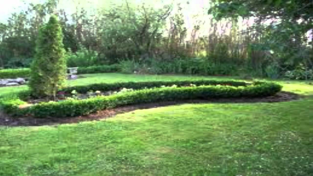 Boxwood Hedge Spacing