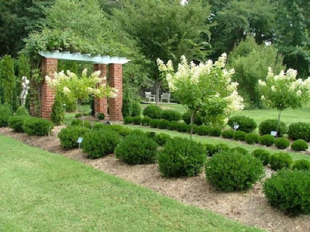 Boxwood Hedge Trimming