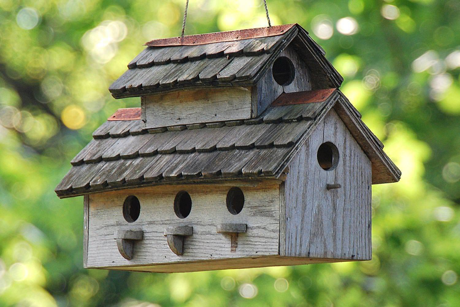 Image of: Affordable Unique Bird Houses For Sale
