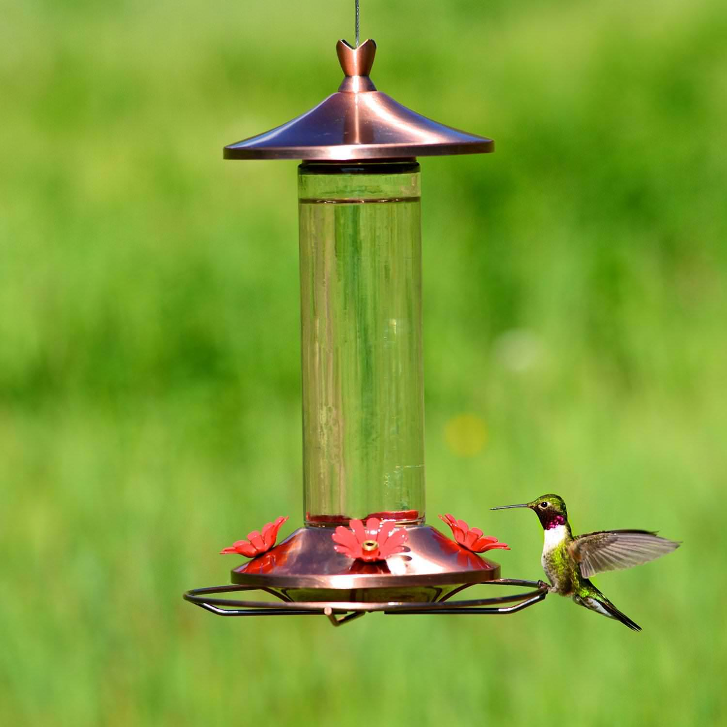 Image of: Perky Pet Bird Feeders
