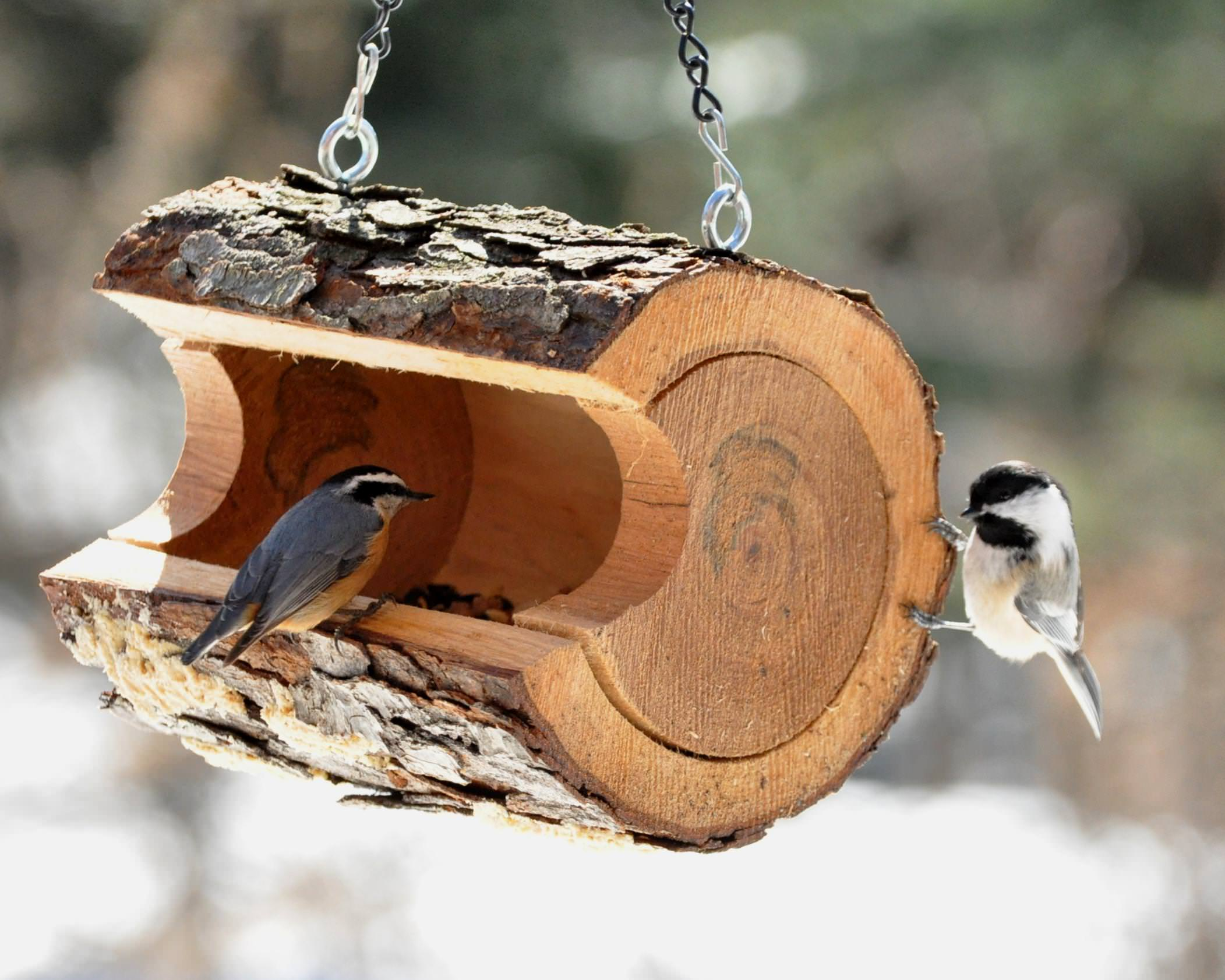 Image of: Unique Bird Feeders For Sale