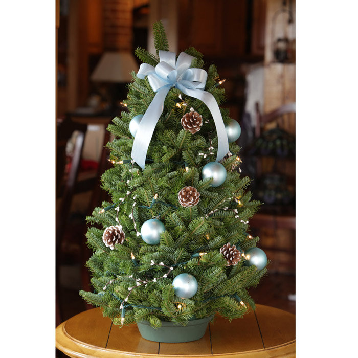 Picture of: Tabletop Christmas Trees Design